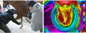 infrared thermal imaging of horses from Infraspection Institute and United Infrared, Inc.